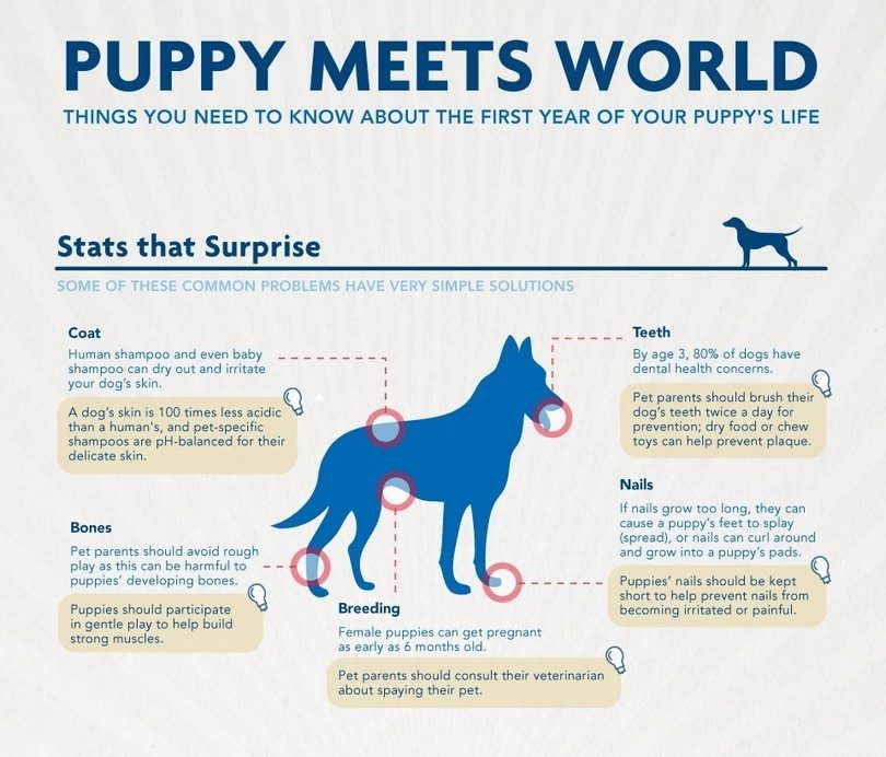 Puppy meets the World infographic