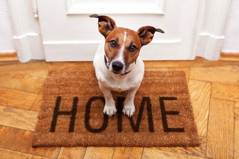 Bringing a new dog home: things you need to know before the family gets bigger