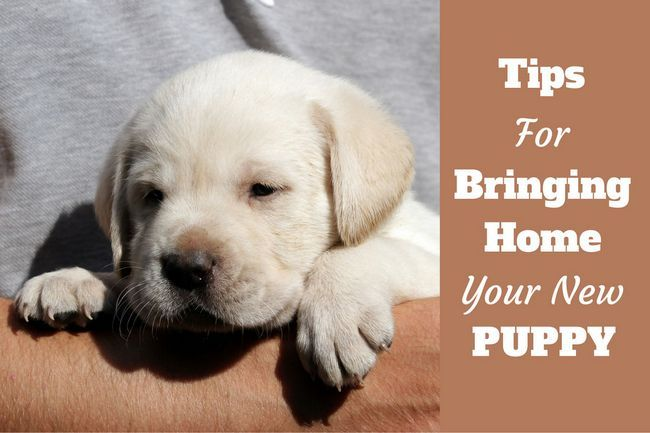 Bringing home a new puppy – tips for getting prepared