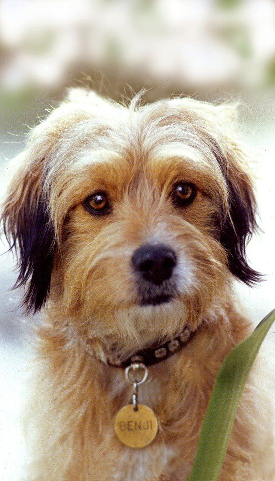 Calling all mutts! Could your dog be the next 'benji'?