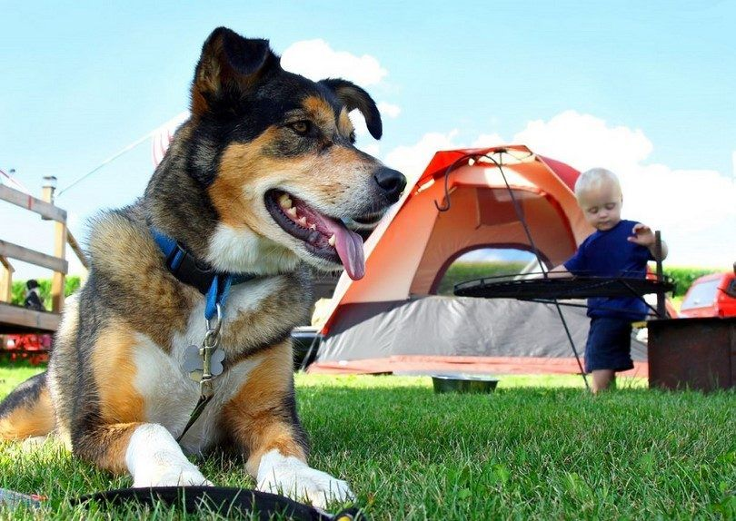 Camping with dogs: tips, guidelines, do's and don'ts