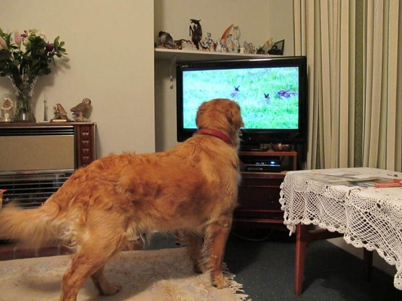 Doggy viewing experience
