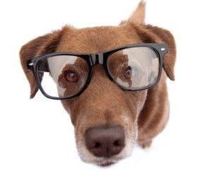 Can I get my dog eyeglasses?