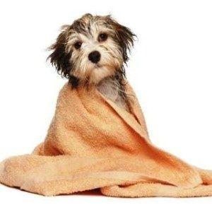 Can I give my dog a bath with human shampoo?