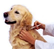 Can I give my dog a vaccination at home?