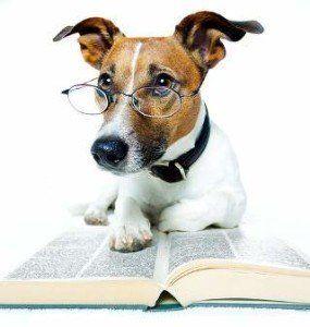 Can I Give My Dog an IQ Test?