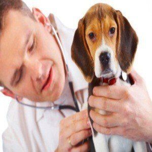 Can I give my dog decongestants?