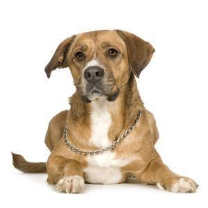 Can I give my dog diarrhea medicine?
