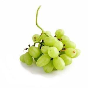 Can I give my dog grapes?