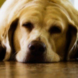 Can I give my dog sleeping pills?