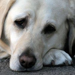 Can I give my dog something for upset stomach?