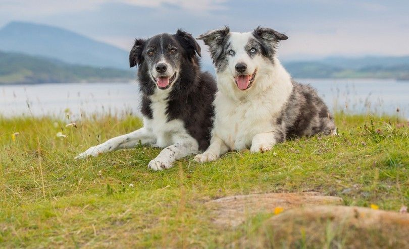 Caring for senior dogs: how to improve the life quality of your 4-legged friend