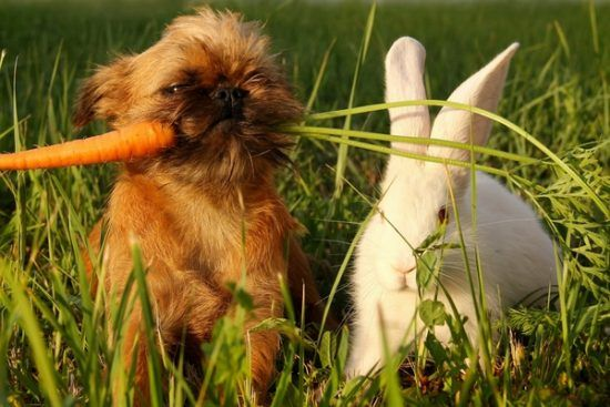 Baby carrots for teething puppies