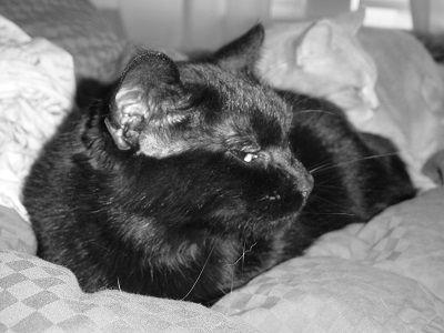 Cat alzheimer's