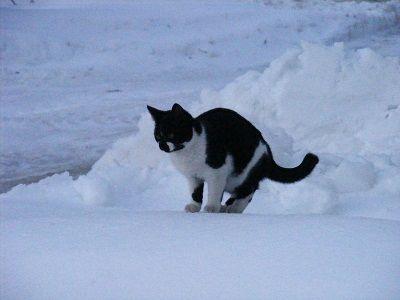 Cat cold