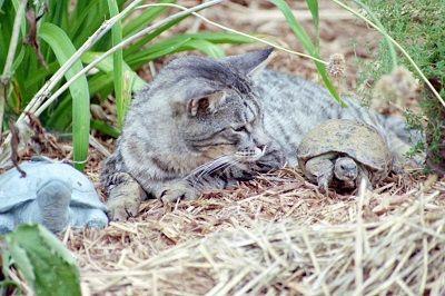 Cat ringworm