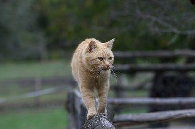 Cat shedding