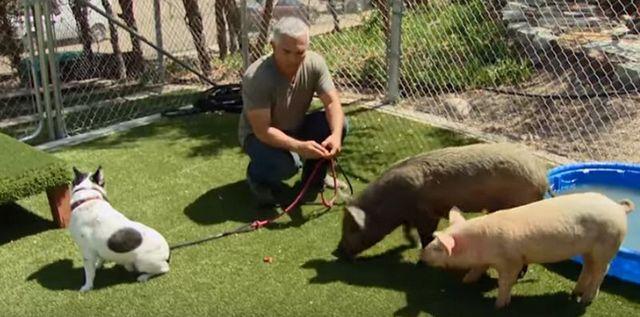 Cesar millan under investigation for possible animal cruelty