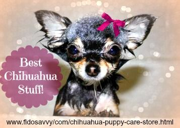 Chihuahua puppy care store
