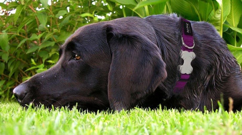 Choosing best dog collars, leashes and harnesses: safety and security on the first place