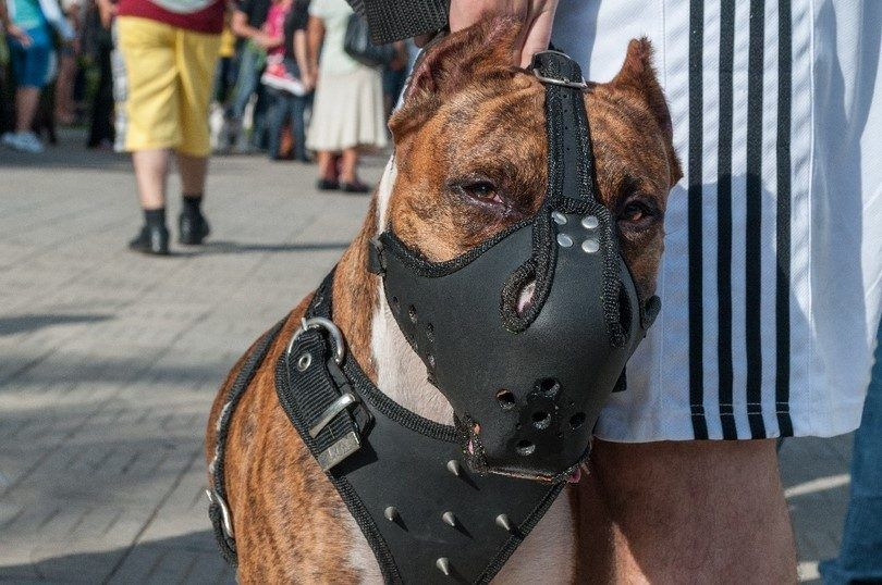 Choosing best dog muzzle: bestseller products overview