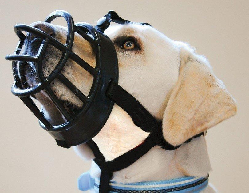 The Baskerville Ultra dog muzzle
