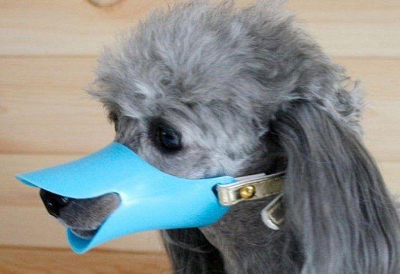 Silicone dog muzzle