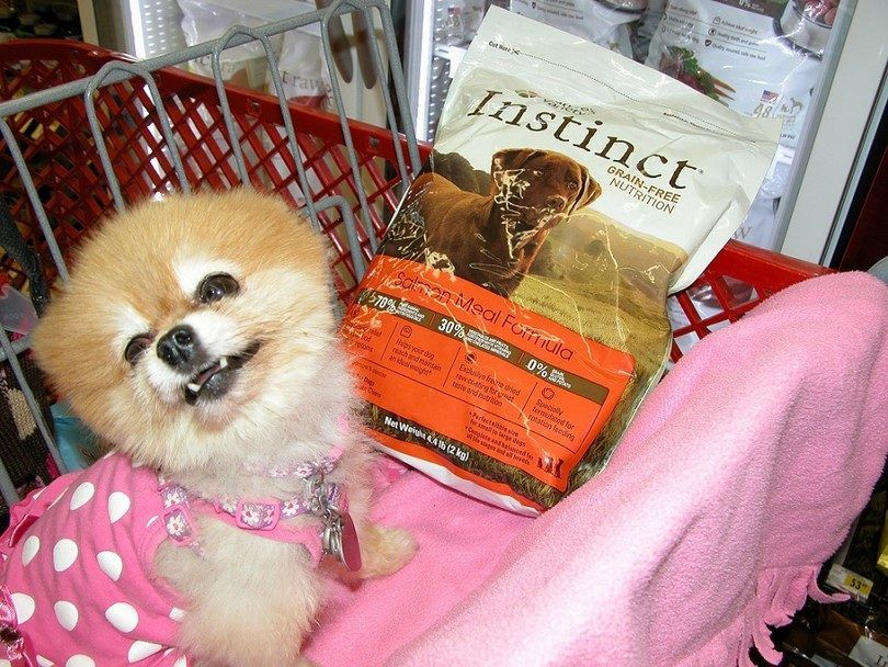 Dog and dry kibble
