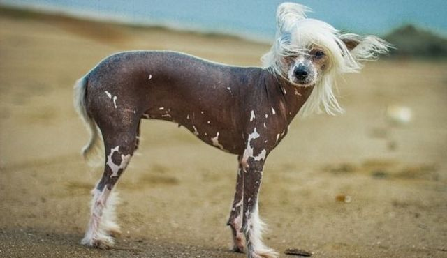 Clean living: a look at dogs that don't shed