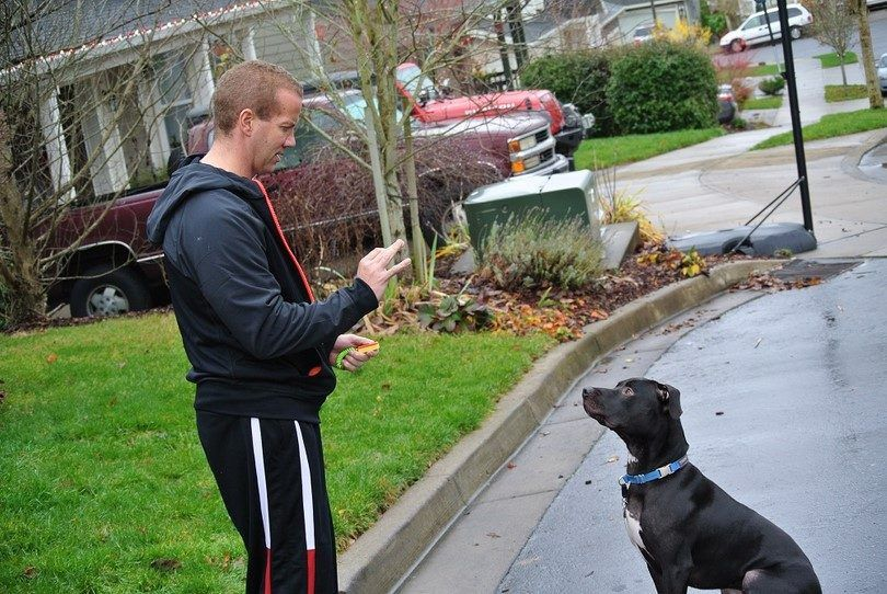Clicker dog training: methods & tips to make the training process easier