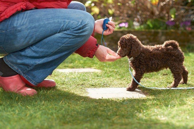 Rewarding your dog after clicker training