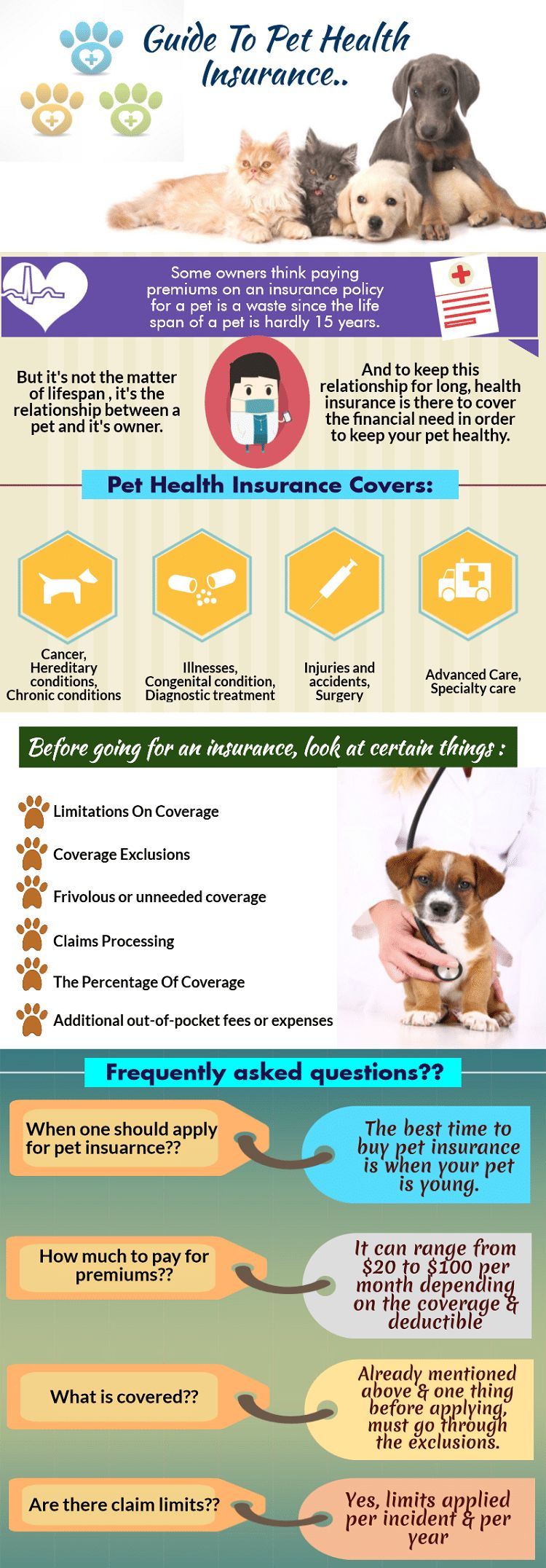 Cold laser therapy for dogs: pain free recovery treatment