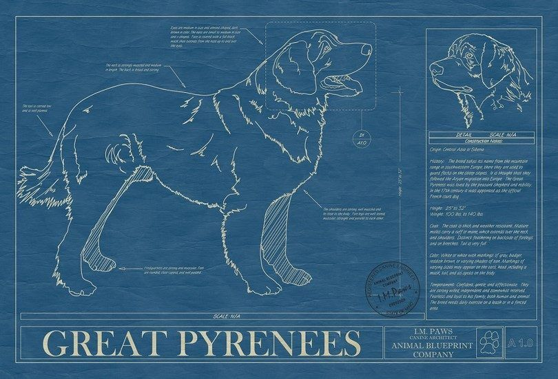 Great Pyrenees infographic