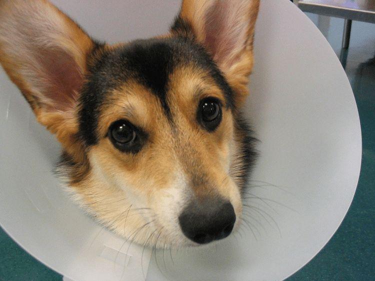 Common dog allergies: fur baby ailments that pet parents should know about
