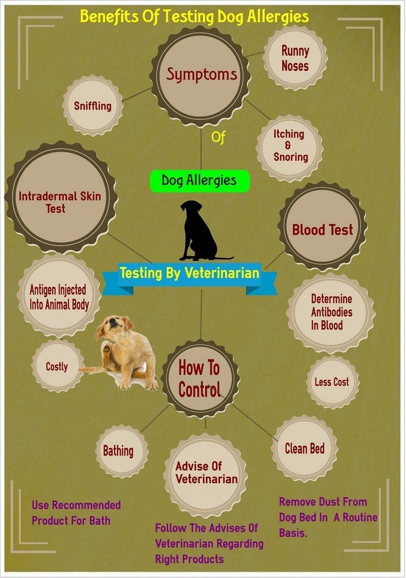 Testing your dog allergies
