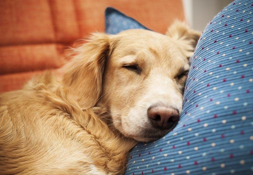 Congestive heart failure in dogs: understand & recognize symptoms and causes