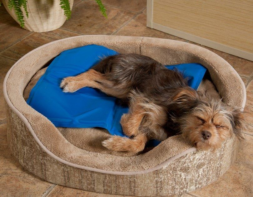 Cooling pad for dogs: keeping your best friend happy and cool