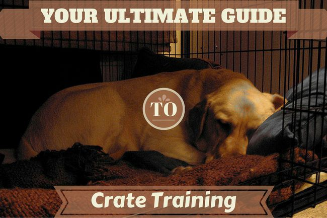 Crate training – the ultimate guide