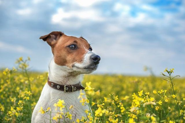 De-worming your dog naturally
