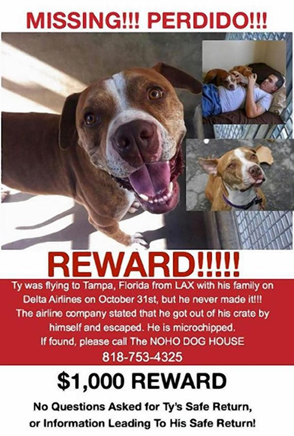 Delta airlines accused of losing dog at lax