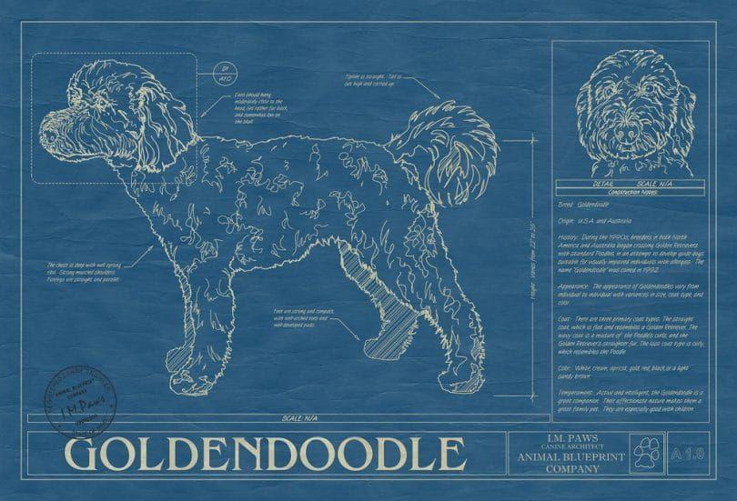 Goldendoodle print