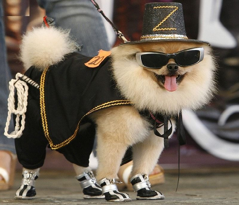 Designer dog clothes: how to make your pet stylish