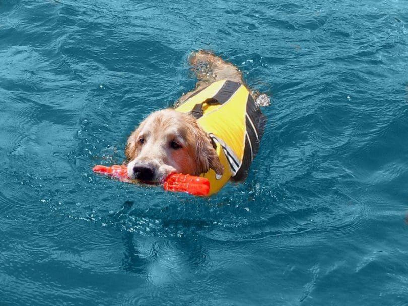 SeaDog Pro Dog Life Jacket