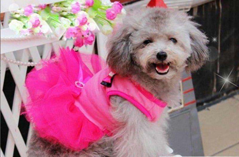 Puppy Clothes Dog Coat Apparel