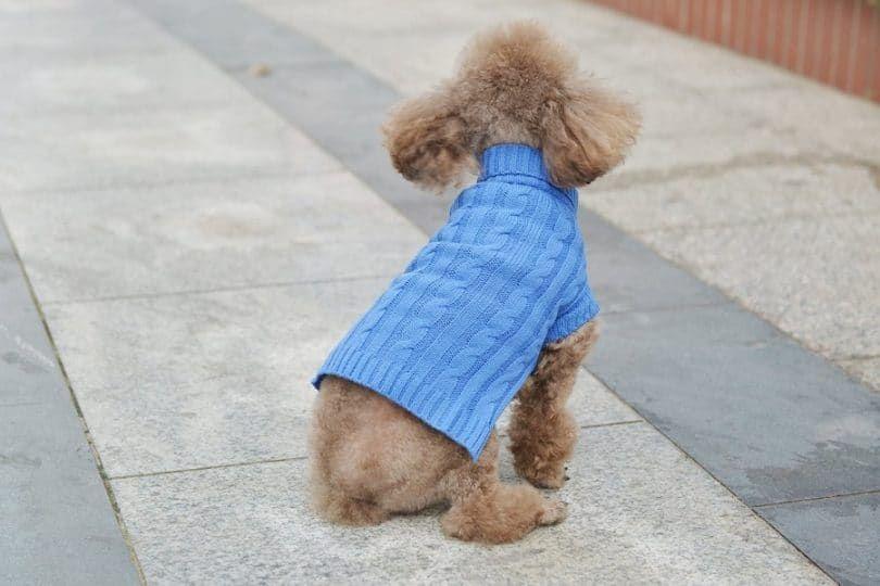 PetTa Purple Decent Turtleneck Puppy Doggie Cat Sweater