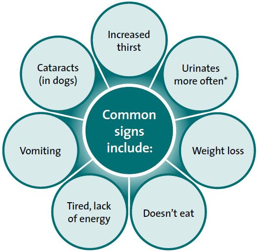 Diabetes in dogs, symptoms, causes, and treatment