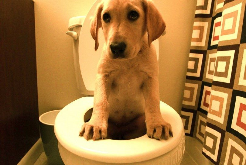 Diarrhea in dogs: symptoms and remedies