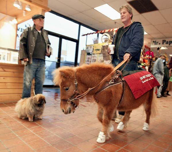 The Colorado bill only mention dogs, not horse service animals. Image source: @MichalAndersen via Flickr