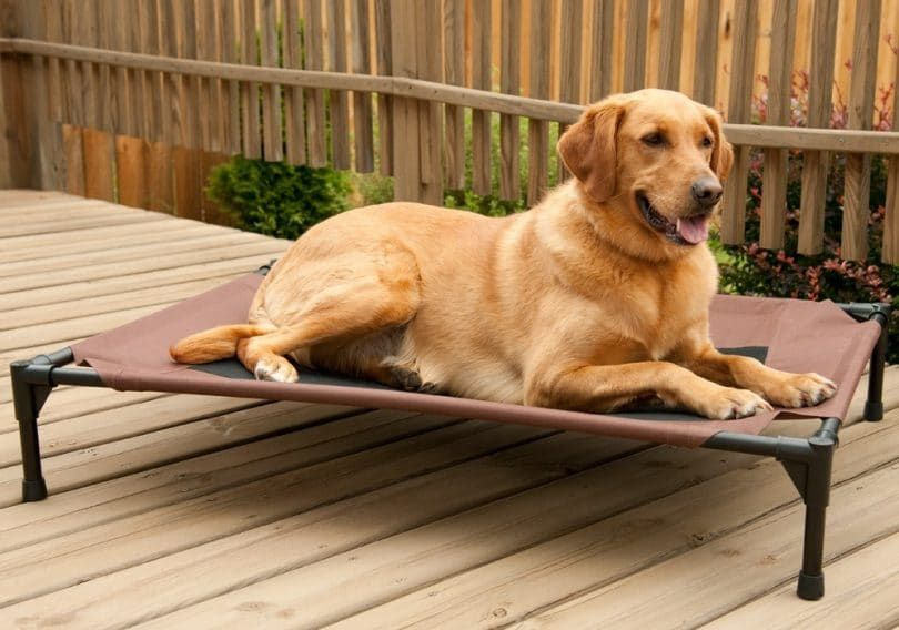 Cots for dog