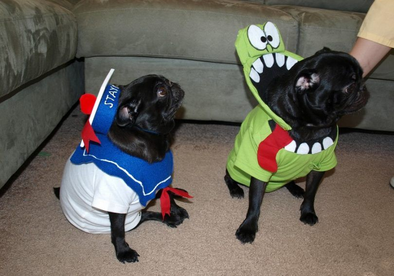 Diy dog halloween costumes: amazing ideas for an amazing time together